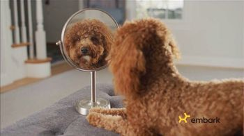 Embark Dog DNA Test TV Spot, 'Why?: $50'