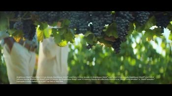 Brighthouse Financial Shield Annuities TV Spot, 'The Vineyard: Looking for Some Protection' - Thumbnail 2