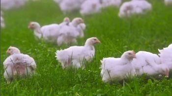 Perdue Farms Harvestland TV Spot, 'A Walk Outside' Song by The Brady Bunch - Thumbnail 5