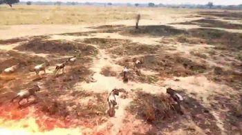 Horn's Africa Safaris TV Spot, 'Dream Hunt' - Thumbnail 1