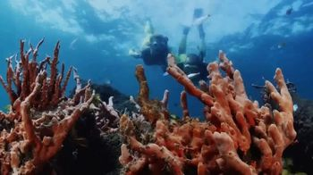 Discover the Palm Beaches TV Spot, 'Golden Waves of Light' - Thumbnail 4