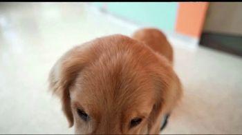 NutriSource TV Spot, 'Rocket the Facility Dog' - Thumbnail 8