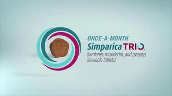 Simparica Trio TV Spot, 'Simplifies Protection' - Thumbnail 4