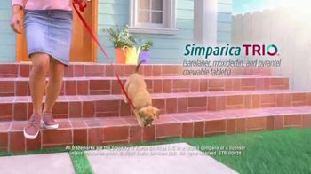 Simparica Trio TV Spot, 'Simplifies Protection' - Thumbnail 7