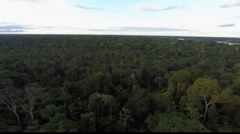 World Wildlife Fund TV Spot, 'Protect our Forests' - Thumbnail 1
