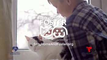 Clear the Shelters TV Spot, 'Telemundo 39: acoge una mascota' [Spanish]
