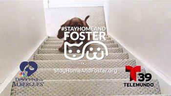 Clear the Shelters TV Spot, 'Telemundo 39: acoge una mascota' [Spanish] - Thumbnail 10