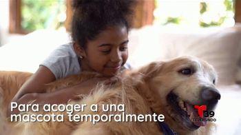 Clear the Shelters TV Spot, 'Telemundo 39: acoge una mascota' [Spanish] - Thumbnail 2