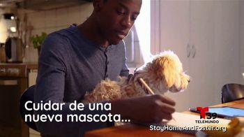 Clear the Shelters TV Spot, 'Telemundo 39: acoge una mascota' [Spanish] - Thumbnail 5