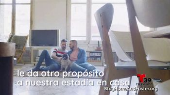 Clear the Shelters TV Spot, 'Telemundo 39: acoge una mascota' [Spanish] - Thumbnail 6