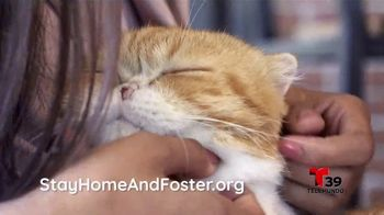Clear the Shelters TV Spot, 'Telemundo 39: acoge una mascota' [Spanish] - Thumbnail 7