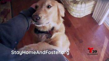 Clear the Shelters TV Spot, 'Telemundo 39: acoge una mascota' [Spanish] - Thumbnail 9