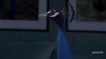 Peacock TV TV Spot, 'Law & Order: Special Victims Unit' - Thumbnail 2