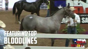 Superior Livestock Auction Yearling Sale TV Spot, 'Texas Quarter Horse Association: Premier' - Thumbnail 5