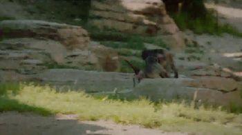 San Diego Zoo TV Spot, 'Keeping Wildlife Safe: Now Open' - Thumbnail 4