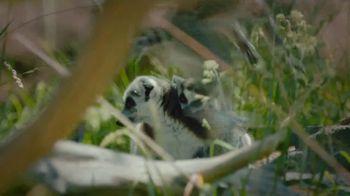 San Diego Zoo TV Spot, 'Keeping Wildlife Safe: Now Open' - Thumbnail 5
