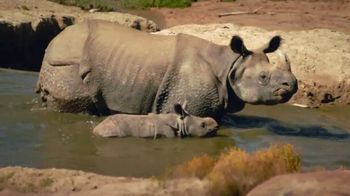 San Diego Zoo Safari Park TV Spot, 'A Lot Has Changed: Reopening'