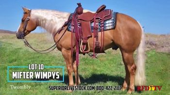 Superior Livestock Auction TV Spot, 'Twombly Performance Horse Sale' - Thumbnail 5