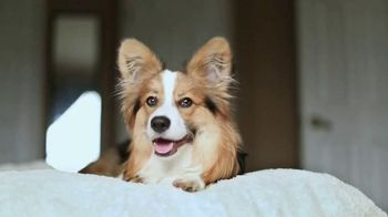 Purina TV Spot, 'To Our Pets, Thank You'