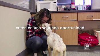 Hill's Pet Nutrition TV Spot, 'Una segunda oportunidad' [Spanish] - Thumbnail 2