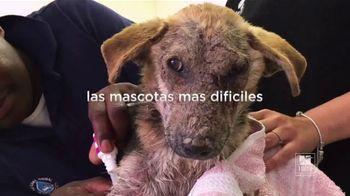 Hill's Pet Nutrition TV Spot, 'Una segunda oportunidad' [Spanish] - Thumbnail 4