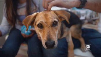 Hill's Pet Nutrition TV Spot, 'Una segunda oportunidad' [Spanish] - Thumbnail 5