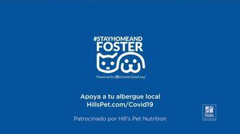 Hill's Pet Nutrition TV Spot, 'Una segunda oportunidad' [Spanish] - Thumbnail 9