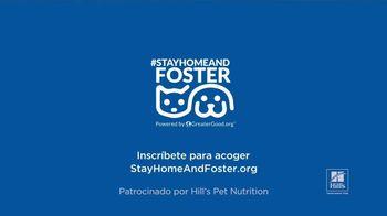 Hill's Pet Nutrition TV Spot, 'El refugio se puede encontrar en lugares inesperados' [Spanish] - Thumbnail 8