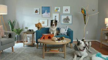 Sling TV Spot, 'Pets' - Thumbnail 7
