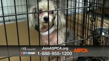 ASPCA TV Spot, 'Darkest Places' Featuring Eric McCormack - Thumbnail 5