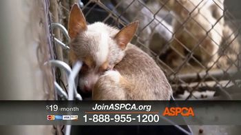ASPCA TV Spot, 'Darkest Places' Featuring Eric McCormack - Thumbnail 8
