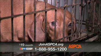 ASPCA TV Spot, 'Darkest Places' Featuring Eric McCormack - Thumbnail 9