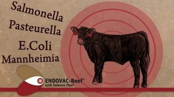 Endovac Animal Health ENDOVAC-Beef TV Spot - Thumbnail 7
