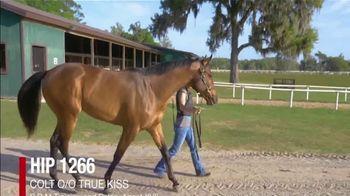 Claiborne Farm OBS Spring Sale TV Spot, 'Colts' - Thumbnail 6