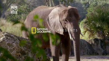 Disney+ TV Spot, 'Magic of Disney's Animal Kingdom'