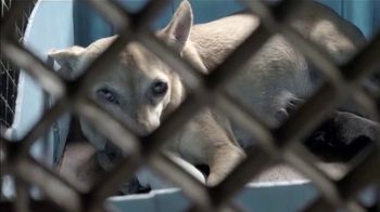 ASPCA TV Spot, 'Save Animals from the Summer Heat'