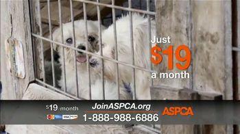 ASPCA TV Spot, 'Save Animals from the Summer Heat' - Thumbnail 3