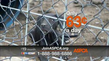 ASPCA TV Spot, 'Save Animals from the Summer Heat' - Thumbnail 4