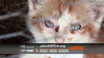 ASPCA TV Spot, 'Save Animals from the Summer Heat' - Thumbnail 7