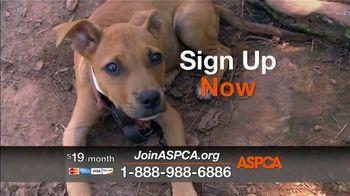 ASPCA TV Spot, 'Save Animals from the Summer Heat'