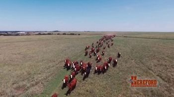 American Hereford Association TV Spot, 'More Pounds, More Profit' - Thumbnail 1