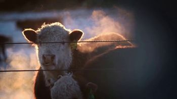 American Hereford Association TV Spot, 'More Pounds, More Profit' - Thumbnail 2