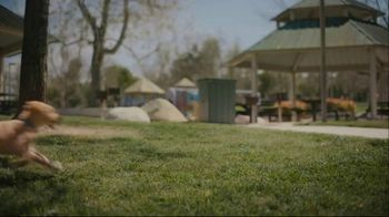 Subaru A Lot to Love Event TV Spot, 'Dog Tested: No Pets Allowed' [T2] - Thumbnail 6