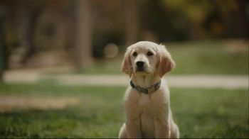 Subaru A Lot to Love Event TV Spot, 'Dog Tested: No Pets Allowed' [T2] - Thumbnail 7