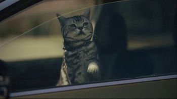 Subaru A Lot to Love Event TV Spot, 'Dog Tested: No Pets Allowed' [T2] - Thumbnail 8