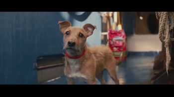 Purina TV Spot, 'Every Detail'
