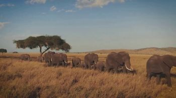 World Wildlife Fund TV Spot, 'Baby Elephants'