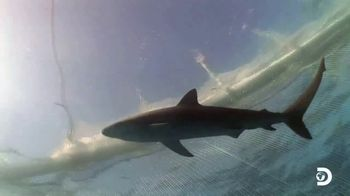 Oceana TV Spot, 'Shark Week: Need Our Help' Featuring Nina Dobrev - Thumbnail 4