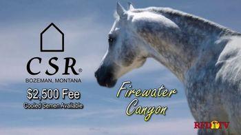 Copper Spring Ranch TV Spot, 'Performance Horse Breeding Program: Firewater Canyon' - Thumbnail 5