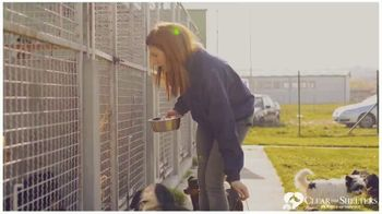 Clear the Shelters TV Spot, 'NBC 6 Miami: Forever Home' - Thumbnail 3